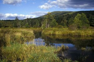 Wetland in Catskills mountains